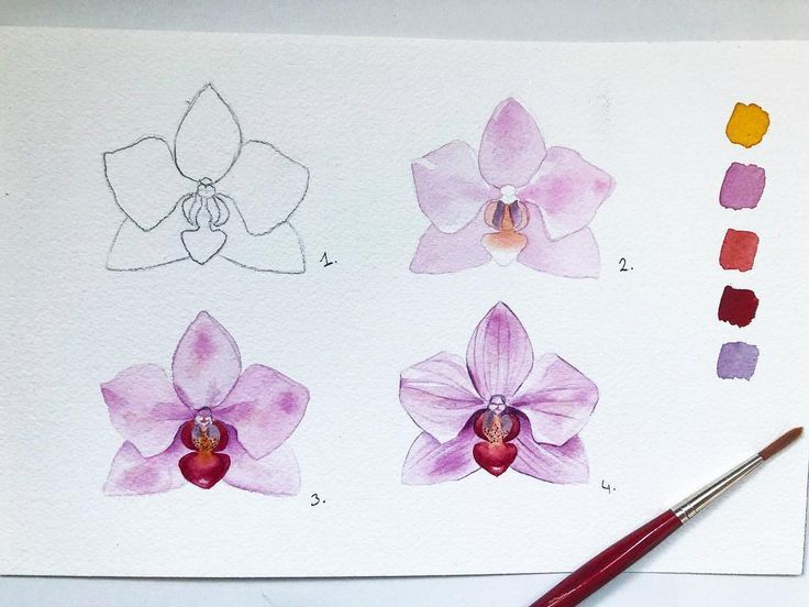 Pelin Auf Instagram Wie Man Eine Einfache Orchidee Malt Orchidee Orchi Orchideen Wasserfarbenblumen Blumenzeichnung
