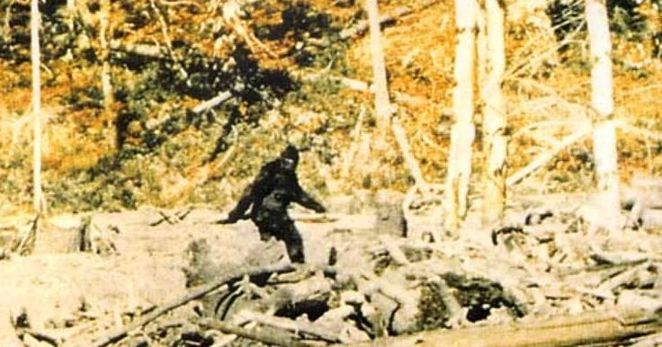 The truely endangered species? Intelligent Californians! Video: California Liberals Want Bigfoot Added to Endangered Species List