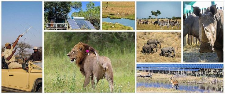 We are very proud of our continued investment in renewable energy which has seen us maintain a strong track record in achieving the highest grade of ecotourism certification from Botswana Tourism for our Botswana camps!