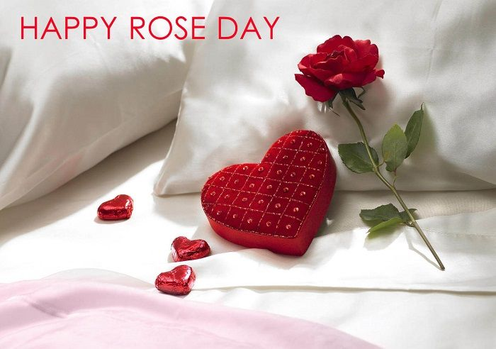 Happy Rose Day Wallapers