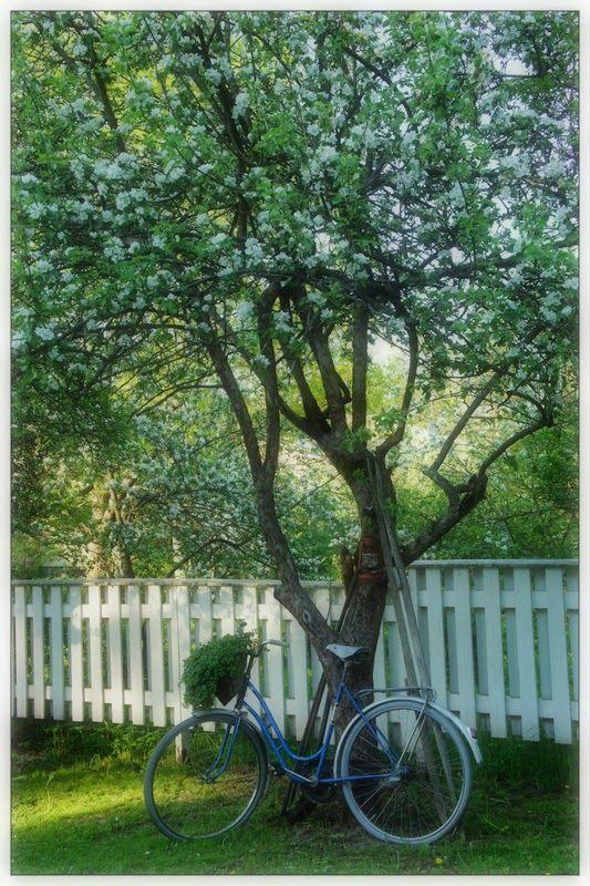 Oi omenapuu <3