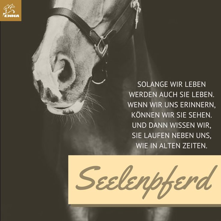 Pferdesprücheu0026Pferdefutter Emma Pferdefuttershop.de ...
