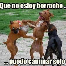 Resultado de imagen de perros chistes