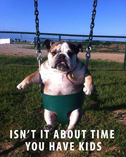 English Bulldog in Swing: Funny Dogs