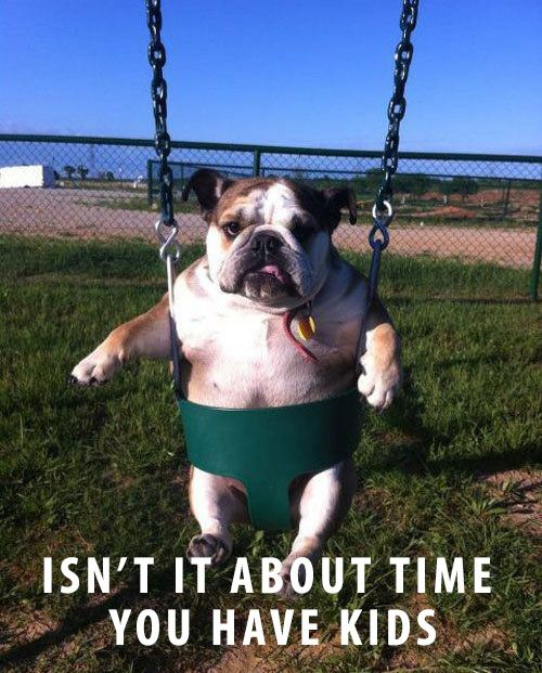 English Bulldog in Swing: Funny Dogs