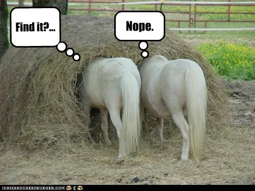 Ponies Lost in a Hay Pile!