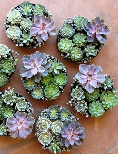 Succulents. Like the round defined look.  Bury small pots of arrangement and add rocks around to maintain definition. Add to my present succulent river