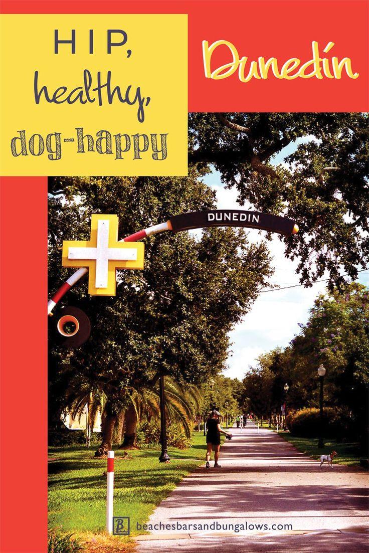 46 best florida pet friendly images on pinterest beach bars hip healthy dog happy dunedin nvjuhfo Images
