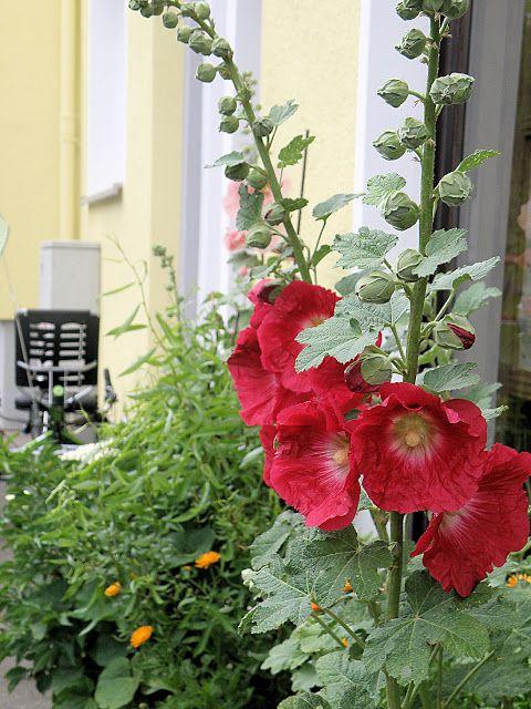 two lives Einklang / Werkstatt-Atelier: Einige Meter Pflanzen...