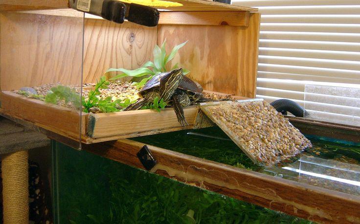 Wide Angle Basking Frank Turtle tank, Turtle setup