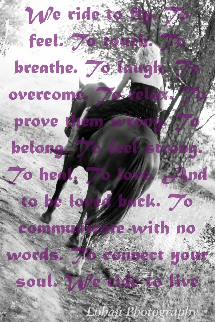 Country Life Quotes And Sayings Horse Photo Shoot Horse Pose Horse Saying  Cowgirl Sayings