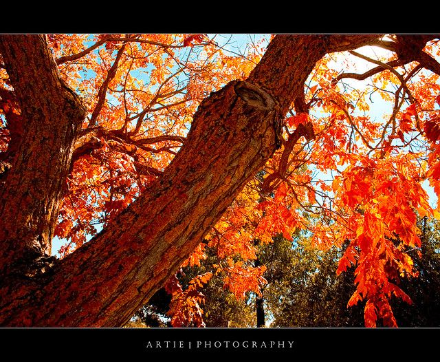 Autumn Trees - Adelaide Hill