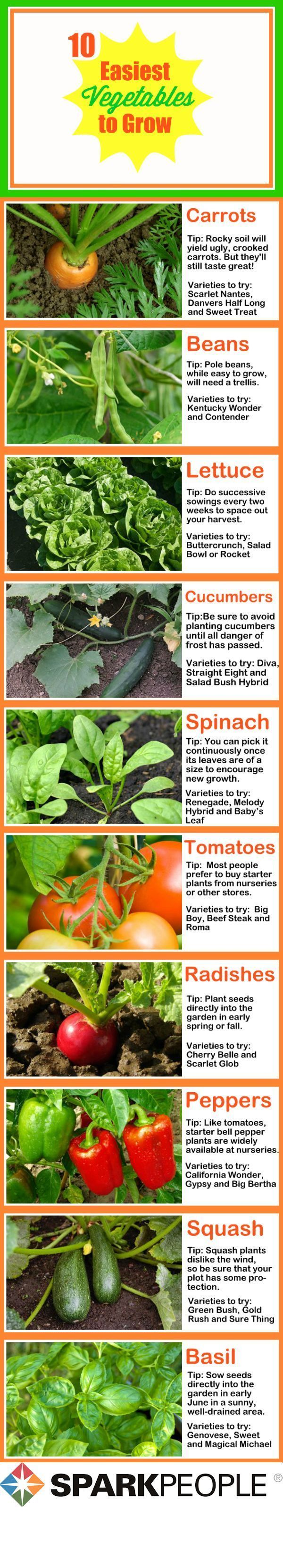 The 10 Easiest Vegetables to Grow:  You don't have to have a green thumb to grow these easy plants! | via @SparkPeople #food #garden #spring