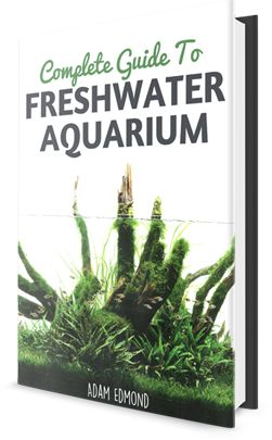 You'll find great resources in a few places online, but here's a list of the top 10 freshwater aquarium plants that are nearly impossible to kill, and grow quickly in most every kind of water.
