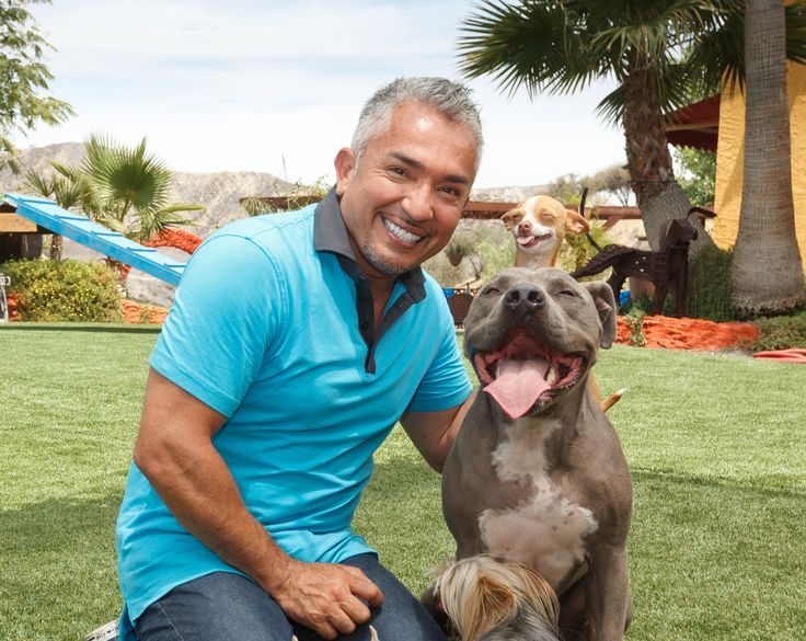 """Here at the Dog Psychology Center (TM), we have a lot of land to cover, EasyTurf artificial grass was the best choice for us and is the best choice for your pack."" - Cesar Millan l #artificialgrassmiami #artificialgrass #artificialgrassflorida #backyard #transformation #gogreen #backyardmakeover"