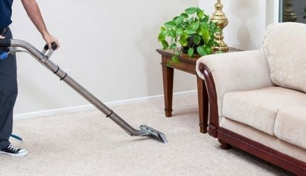 Handy Guide For Controlling The Pests In 2020 How To Clean Carpet Professional Carpet Cleaning Steam Clean Carpet