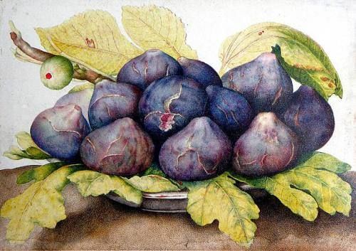 Giovanna Garzoni (1600-1670) Plate of figs