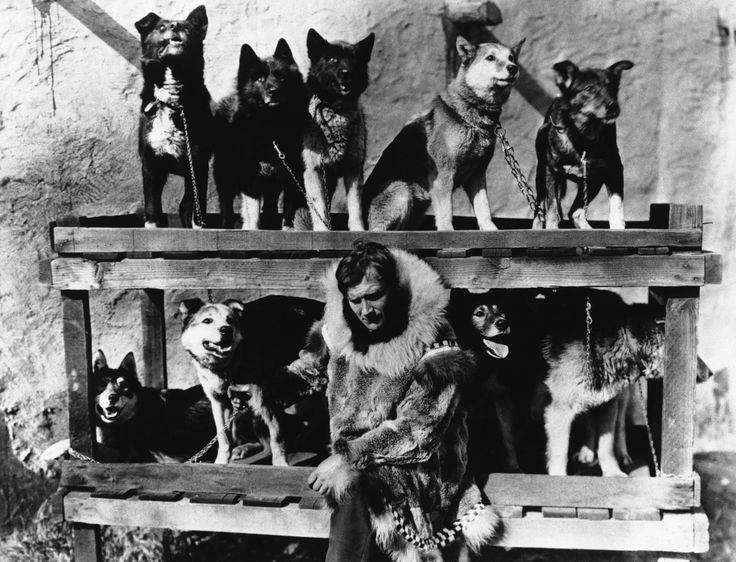 Gunnar Kaasen | Gunnar Kaasen poses in 1925 with the dog team he drove through a ...