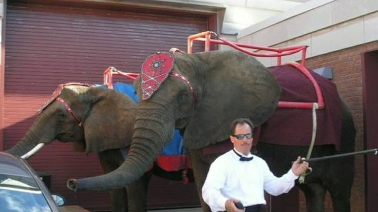 Petition · Johnson County Fair Association : Stop Elephant Acts at Johnson County Fair · Change.org