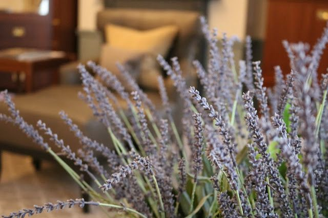 Dried lavender in the newly decorated estate rooms at Gleneagles Hotel, Perthshire, Scotland.