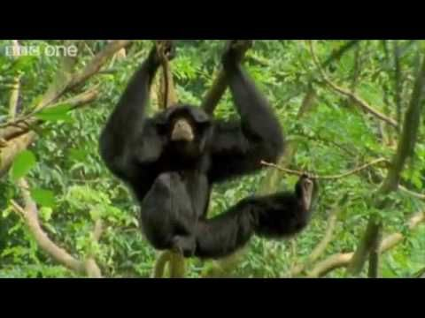 "Best of the BBC's ""Walk on the Wild Side"""