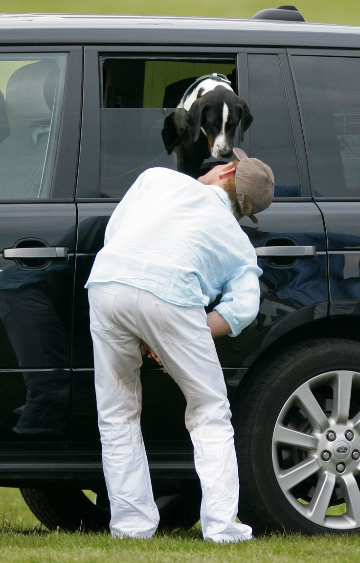 Prince Harry greeting a furry friend. ❤️  (This alone tells me everything I need to know about him.)