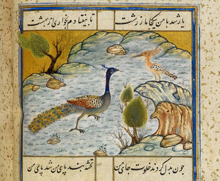 The hoopoe and the peacock | by persian.painting