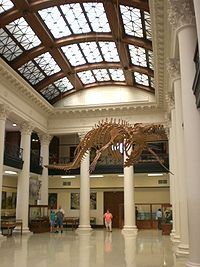 Alabama Museum Of Natural History  - Tuscaloosa - AL