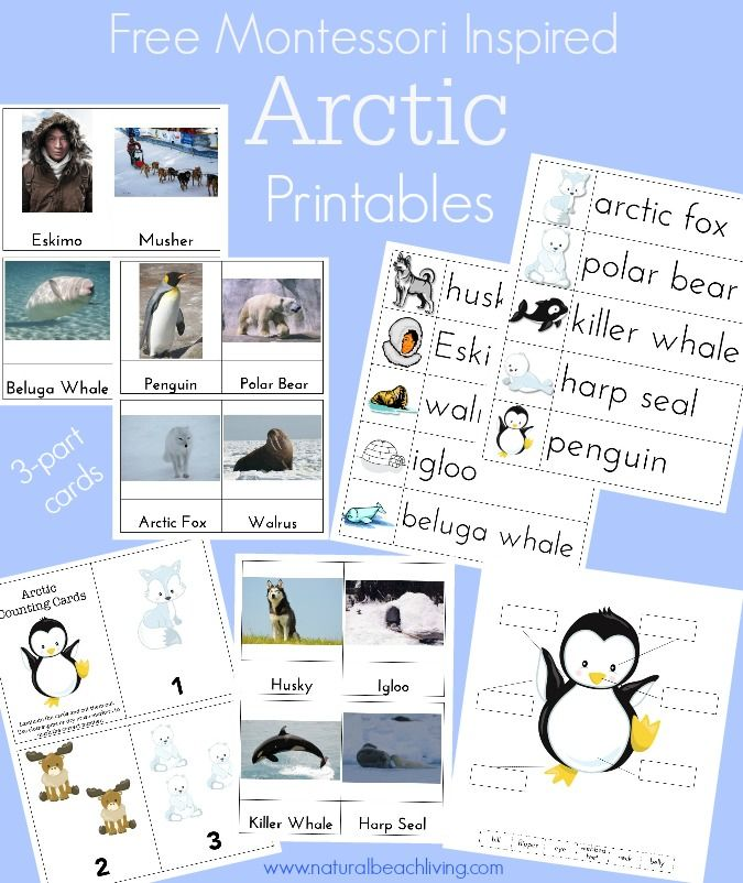 Perfect Montessori Arctic Activities with Free Printables, Penguins, Math, Language, 3 part cards and so much more.
