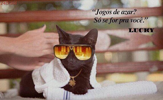 ONG realiza campanha para desmitificar gatos pretos