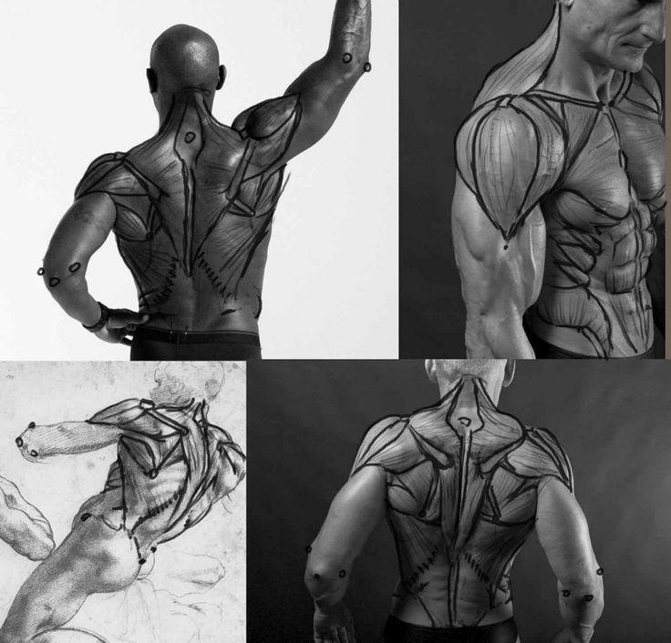 Mejores 17 imágenes de Human Anatomy en Pinterest   Anatomía humana ...