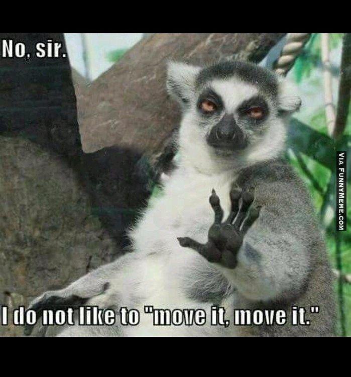 Animal memes No sir...