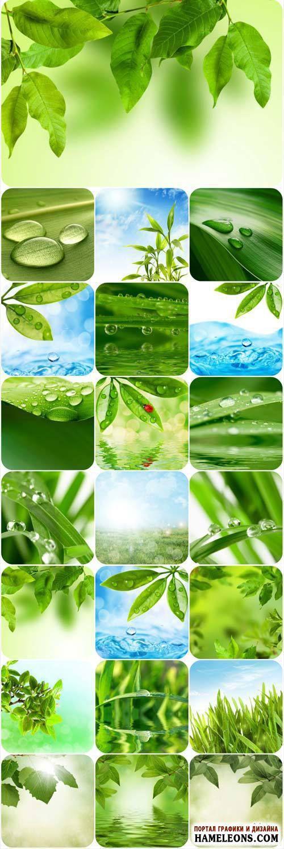 Зеленые листья - весенние фоны - Растровый клипарт | Green spring backgrounds