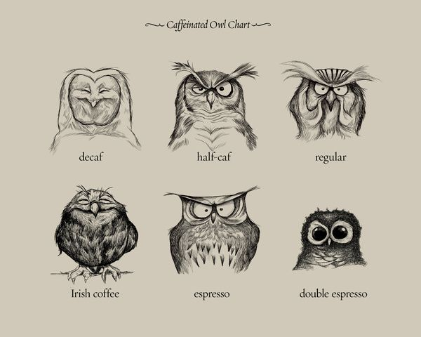 Caffeinated Owls Art Print...Just thought this was cute and I had to put it somewhere!
