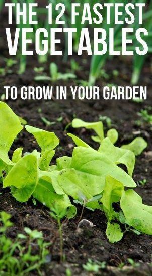 Alternative Gardening: 12 Fastest Vegetables to Grow in your Garden