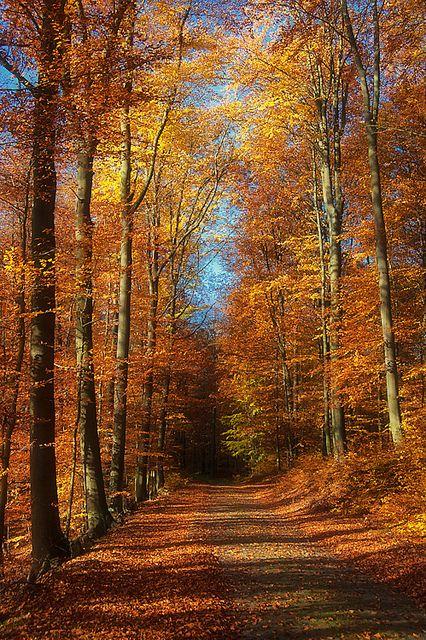 Autumn in Delaware. Tom Koebel. Luxury Voyages. 800-598-0595.