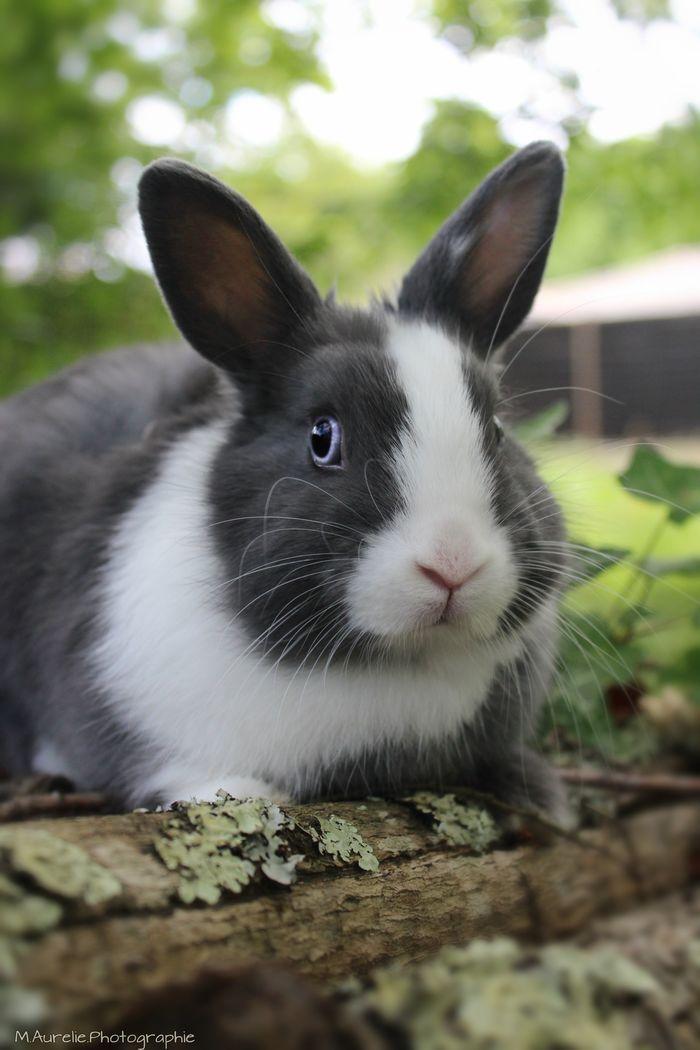 Cute bunny @yummypets #laïdy #rabbit
