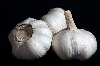 Here's The Best Way To Eliminate Garlic Breath - http://viralfeels.com/heres-the-best-way-to-eliminate-garlic-breath/