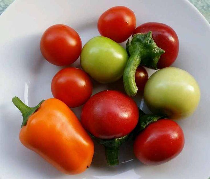 82 besten gruppenboard tomaten ernte bilder auf pinterest gem se kr utergarten und aufwachsen. Black Bedroom Furniture Sets. Home Design Ideas