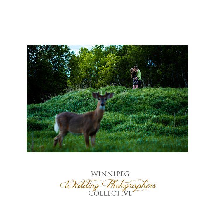 #Engaged #EngagementSession #EngagementPhotos #Winnipeg #WinnipegWeddingPhotographersCollective #TheCollective #Tony #Winnipeg #Manitoba #Kiss #Park #Love #AssiniboineForest #Deer #WildLife