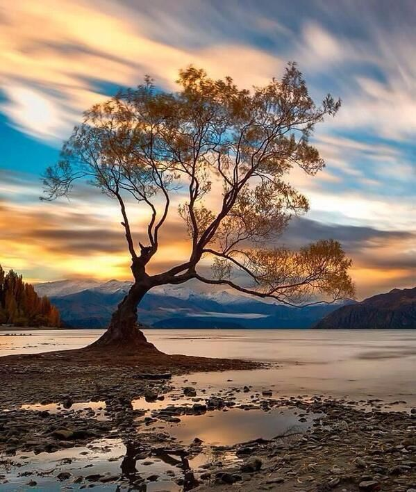 The Most Photographed Tree in Wanaka, New Zealand