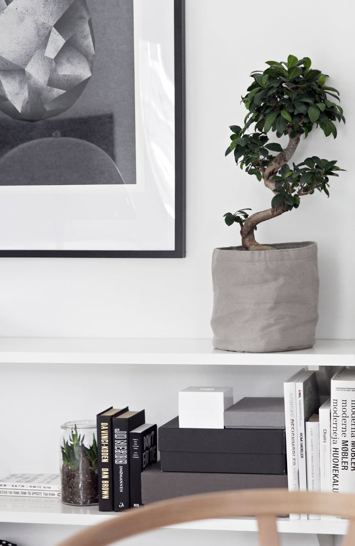 How To String Lights On A Ficus Tree : 20 best ideas about Bonsai At The Office on Pinterest House decorations, Offices and Trees