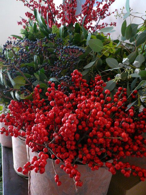 Winter berries in our temporary shop Bacche invernali nel nostro temprary shop www.taniamuser.com
