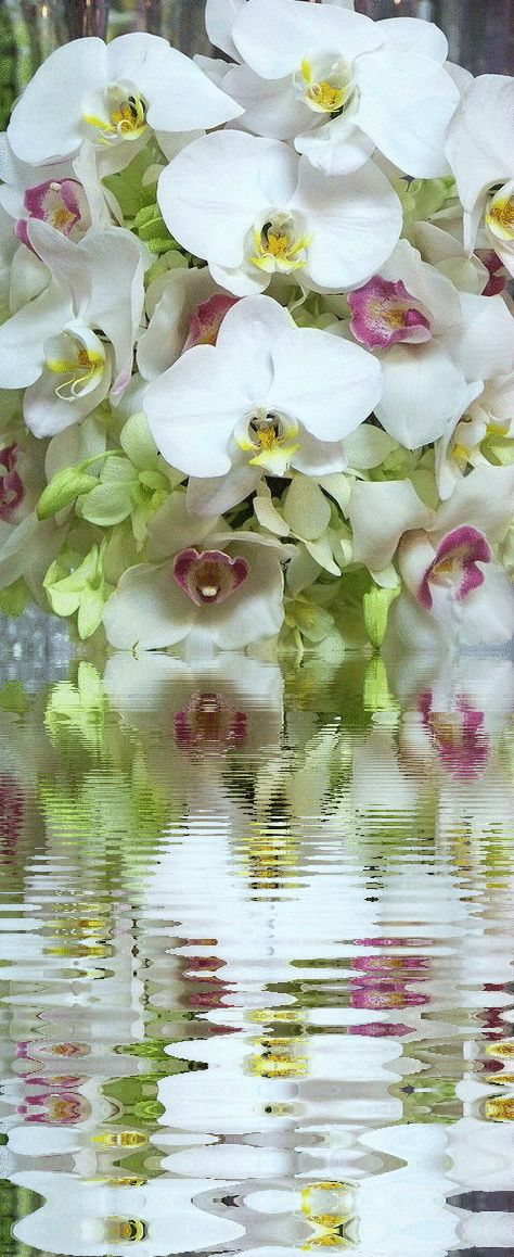 9 Beautiful Orchids Animated Gif Images - Best Animations