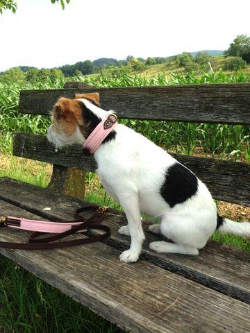 TOBS-dogs.com Natürlich können wir auch für die Kleinen was ordentliches zum Anziehen machen. Hazel (Parson Jack Russel) trägt ein TOBS Halsband SOFT Rosa mit passender Applikation in der Hundeleine.