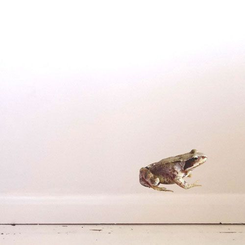Frog Wall Decal by #JuneFoxStudio on Etsy
