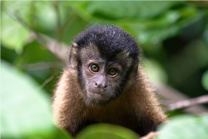Brazil Broadens Rain Forest Protection | Trees, Monkey and Forests