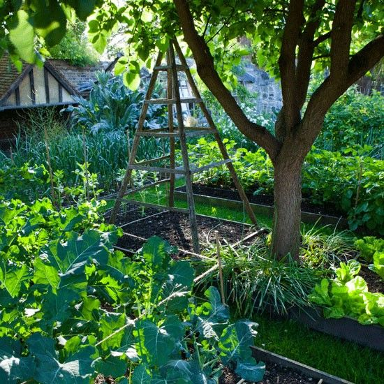 62 best country cottage gardens images on pinterest for Vegetable plot ideas