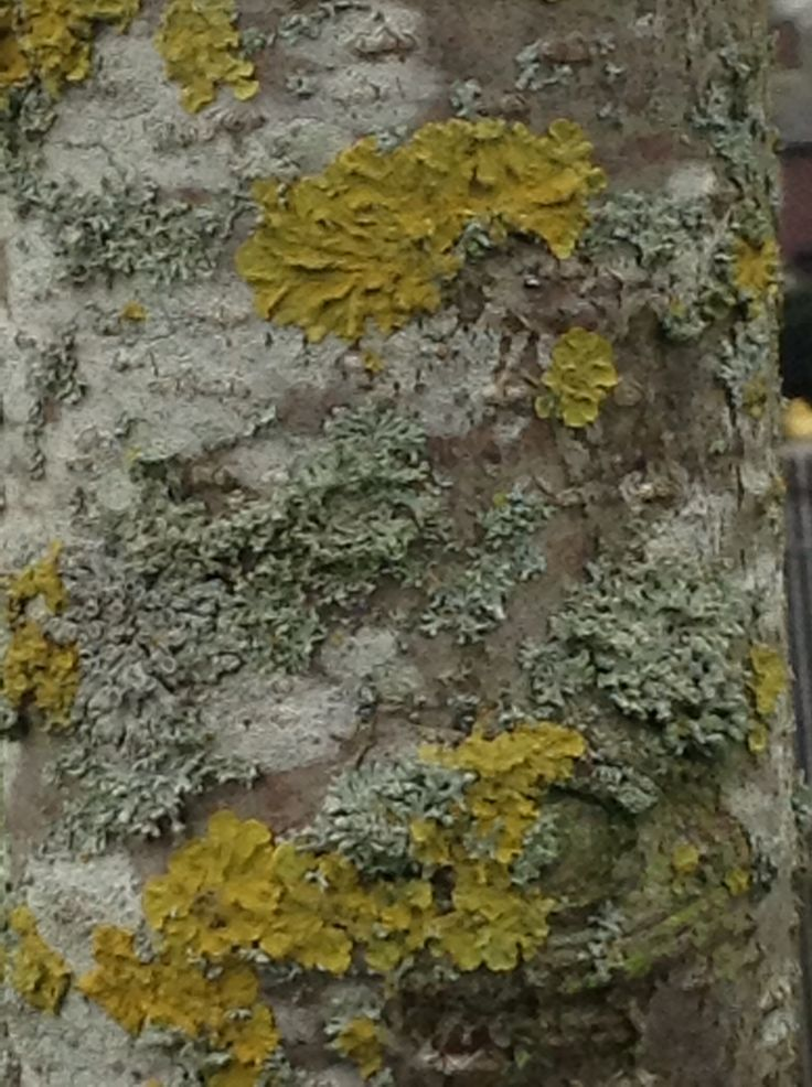 Tree bark which has produced great detail and texture...