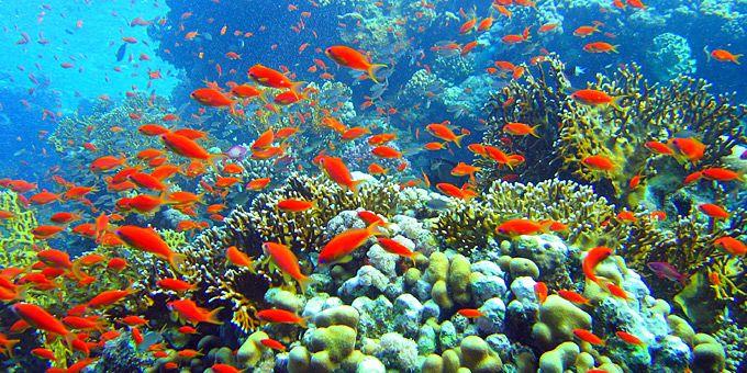 Τα χρώματα του βυθού -   Φωτογραφική μαγεία από τους βυθούς των ωκεανών